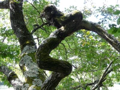 Arbres et forêts dans les contes