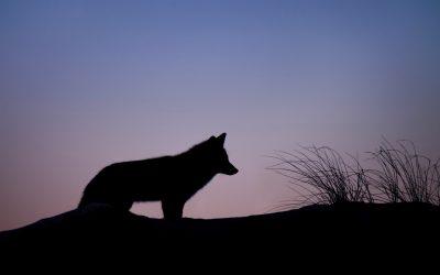 Histoires de loups à la médiathèque de Lanester